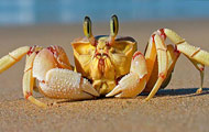Image about Crab at the beach