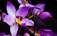 Image about Beautiful orchids jigsaw